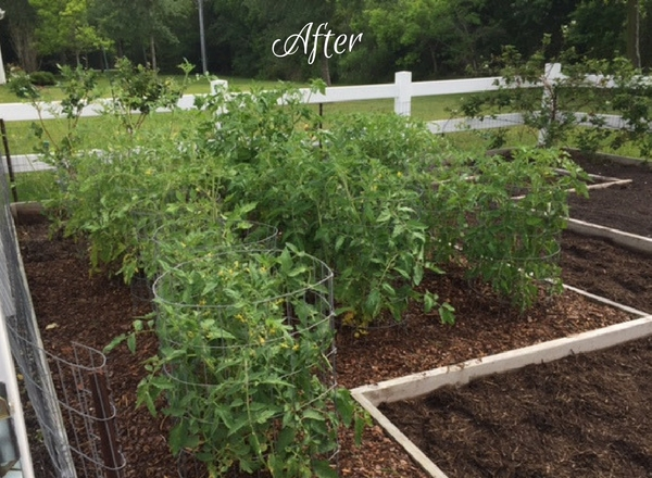 Accountability Report: An Update on My Garden & My Soul - Christian ...